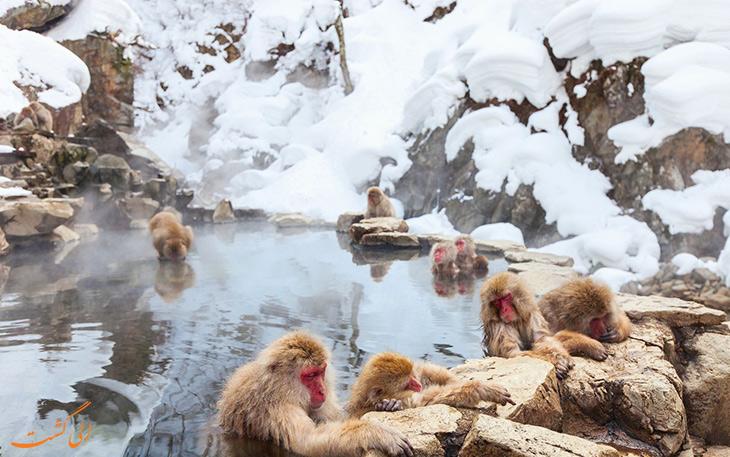 پارک میمون جیگکودانی