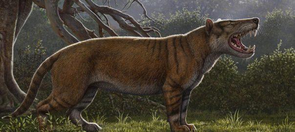 کشف فسیل 20 میلیون ساله در کنیا
