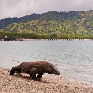 جزایر اکوسیستمی در جهان