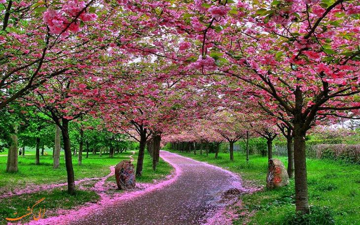 بهار در چین