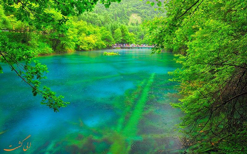 طبیعت بی نظیر پارک ملی دره جیوژای چین