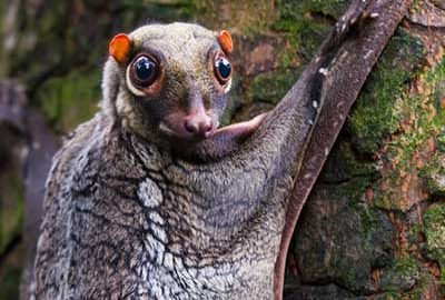 حیوانات بومی مالزی
