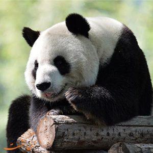 باغ وحش پکن