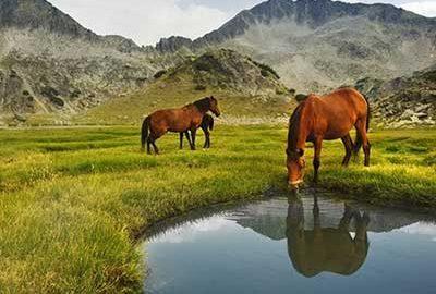 پارک ملی پیرین بلغارستان