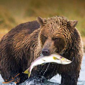خطرناکترین حیوانات روسیه