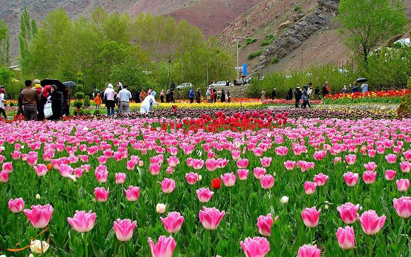 جشنواره لاله های گچسر