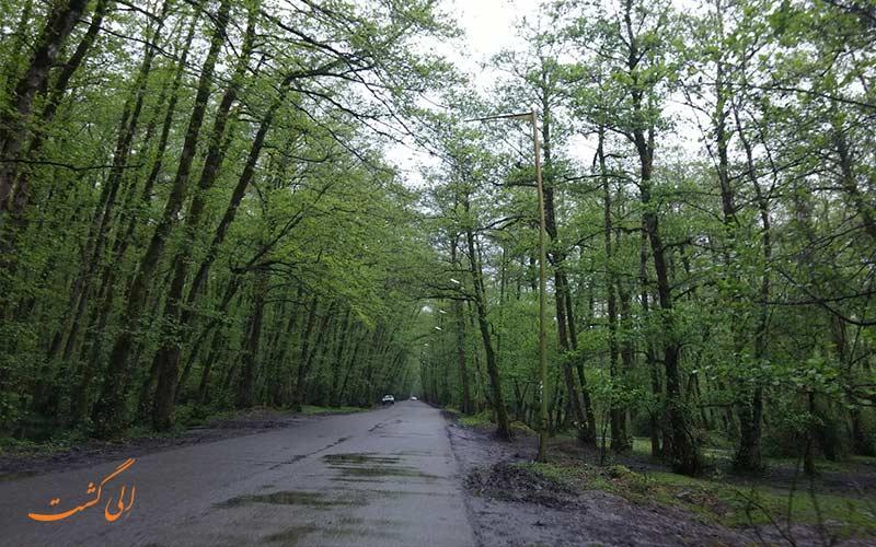 پارک جنگلی گیسوم با جاده رویایی