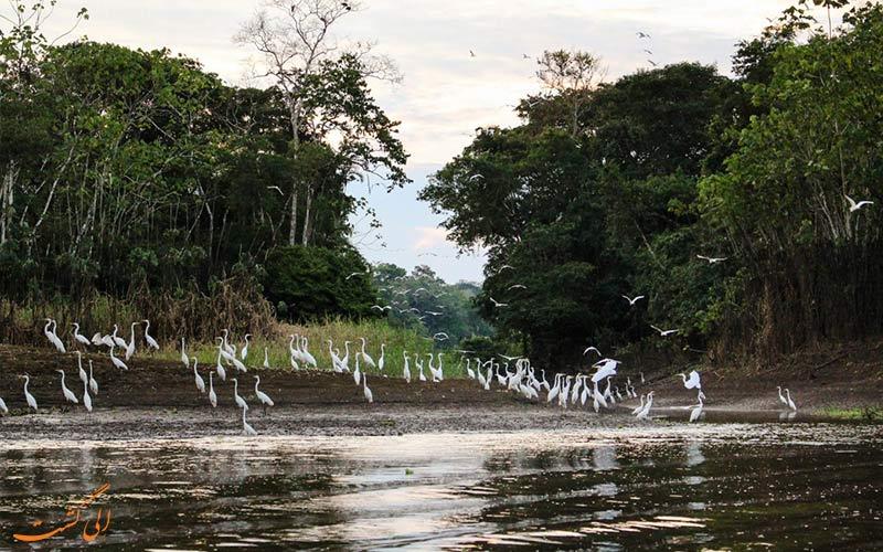 پرندگان-آمازون-در-پرو