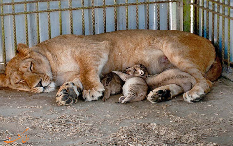 باغ وحش بابلسر | Zoo Garden Shapoor Dashad
