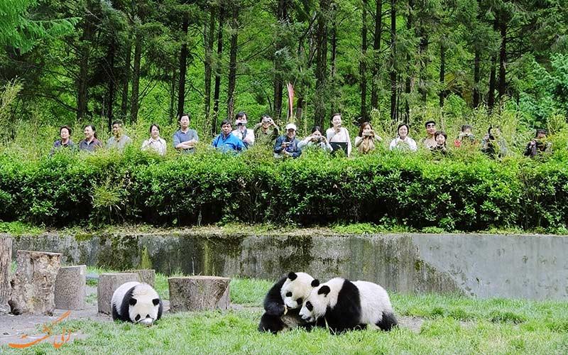 تور و سفرهای طبیعت گردی در چین برای تماشای پاندا