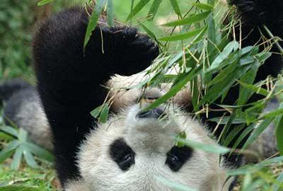 معرفی باغ وحش شانگهای از جاذبه های این شهر