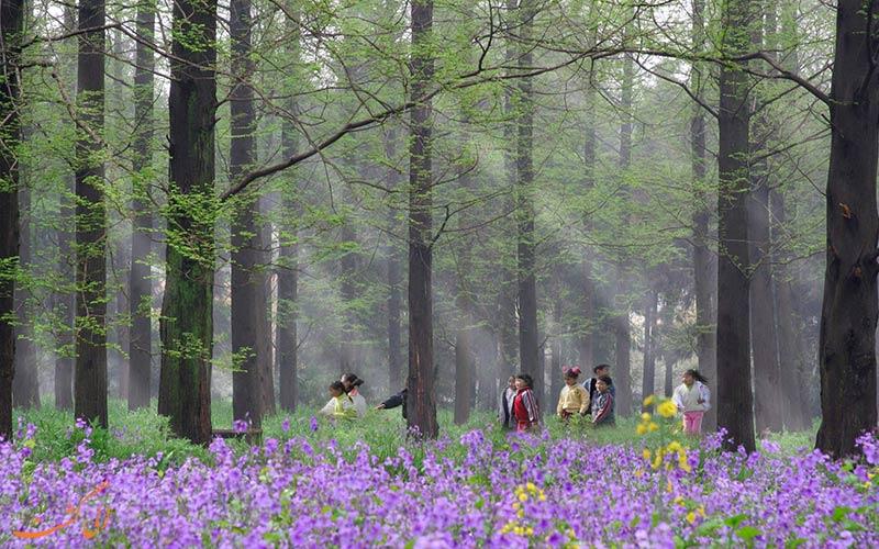 معرفی کامل پارک ملی دونگپینگ در جزیره چونگمینگ شانگهای