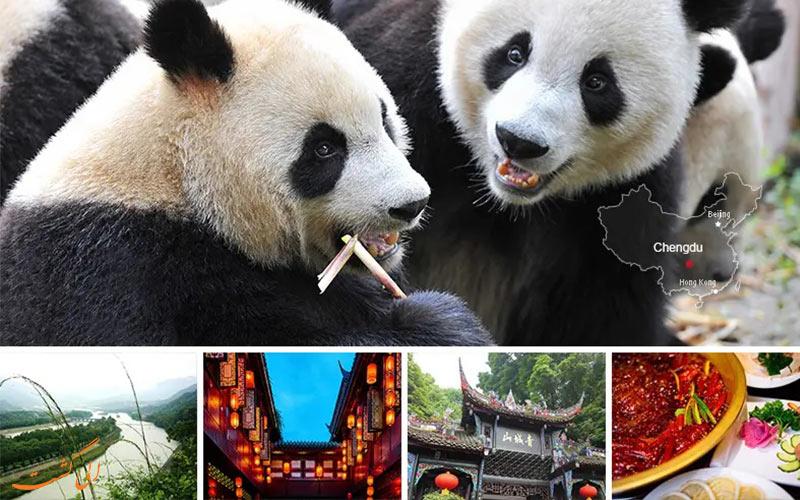 چنگدو از شهرهای معروف چین با پانداهای غول پیکرش