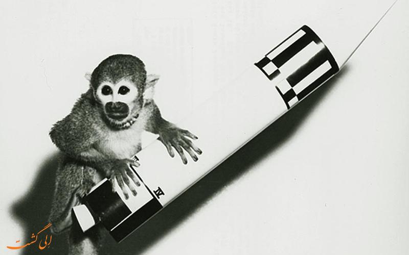 میمون فضایی