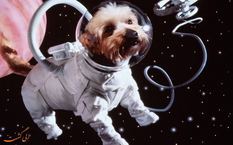 حیواناتی که به ماه فرستاده شدند