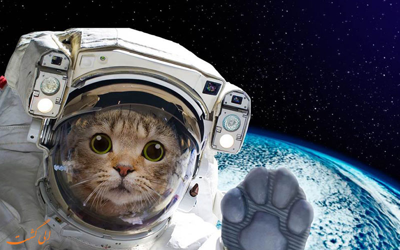 چرا حیوانات به فضا فرستاده شدند؟