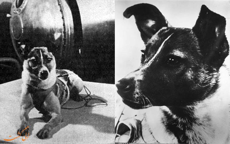 اولین سگ فضانورد، لیکا!
