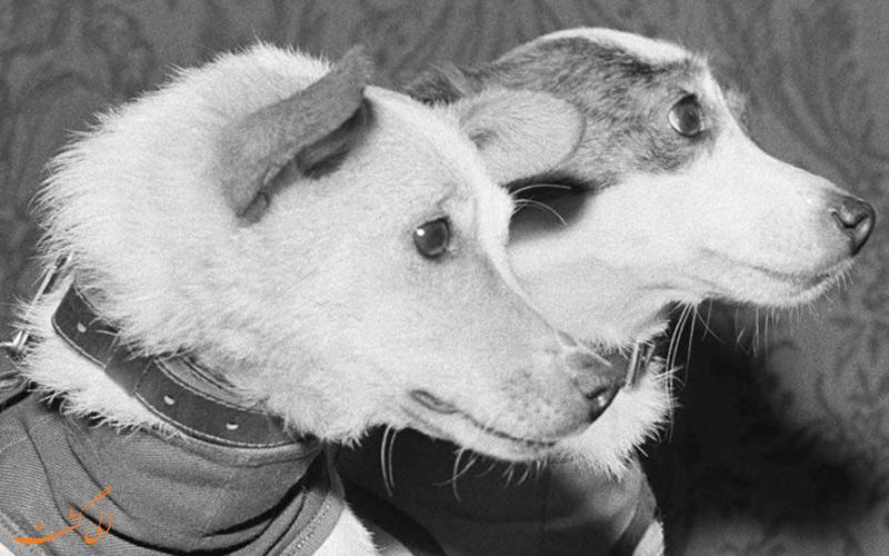 بلکا و استرالکا، دو سگ همسفر فضانورد!