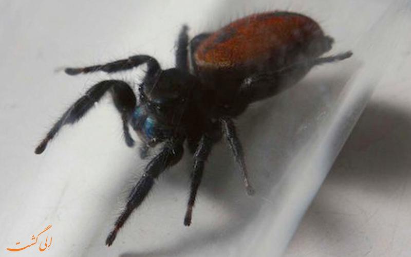 اولین عنکبوتی که بر روی فضا پای گذاشت، نفرتیتی!
