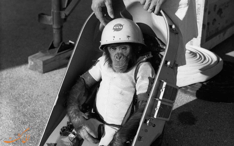 شامپانزه ای به نام هَم، جایگزین انسان در فضا!