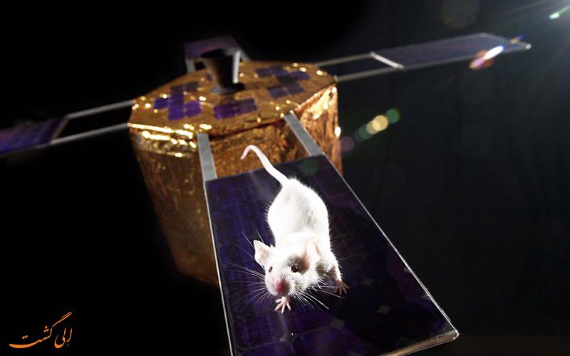 آزمایش بر روی برخی از حیوانات با جثه های کوچک