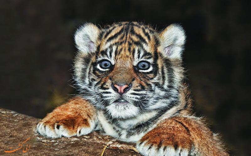 باغ وحش تایگر کینگدوم تایلند