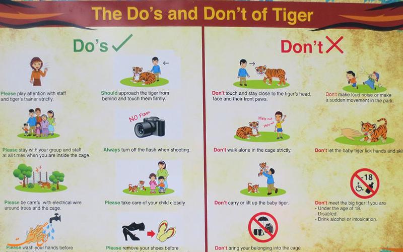 بازدید از باغ وحش تایگر کینگدوم تایلند