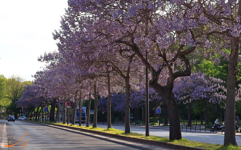 شکوفه های بهاری پاریس در ماه مه