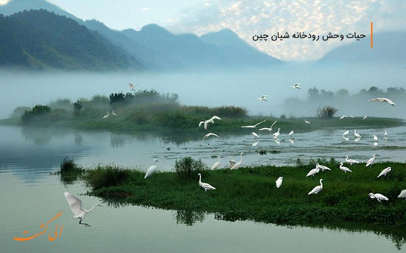 رودخانه ای کریستانی و پرندگان مهاجر چین-رودخانه های چین