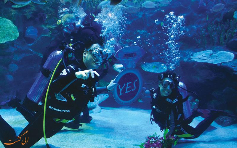 در زیر آب های آکواریوم کوالا خواستگاری کنید!