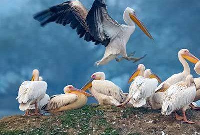 یازدید از جاذبه های هند مانند پارک ملی کلادو هند