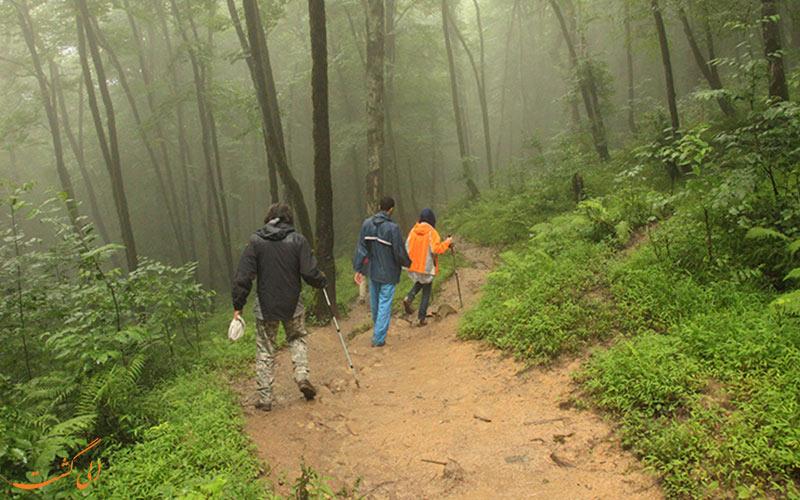 طبیعت گردان در منطقه ی جنگلی لفور