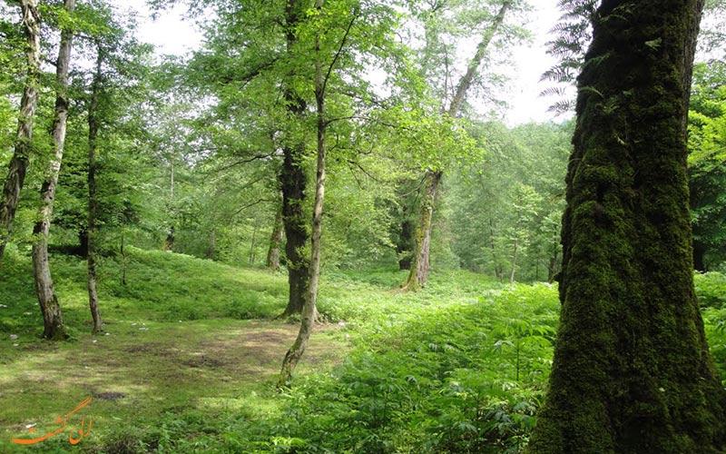 لفور، یکی از جنگل های هیرکانی ایران