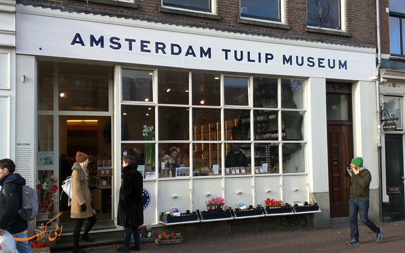 موزه گل لاله در پایتخت هلند