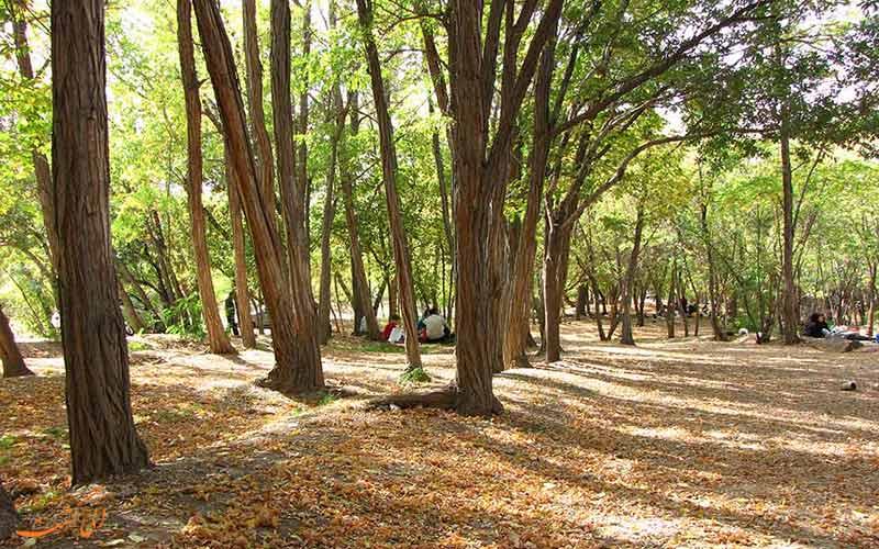 پارک جنگلی چیتگر، معروف ترین جا برای پیک نیک نزدیک تهران