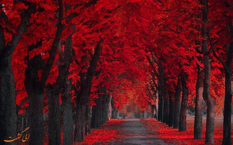 زیبایی های سفر در پاییز
