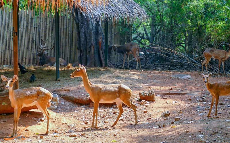 آهوهای باغ وحش دوزیت بانکوک