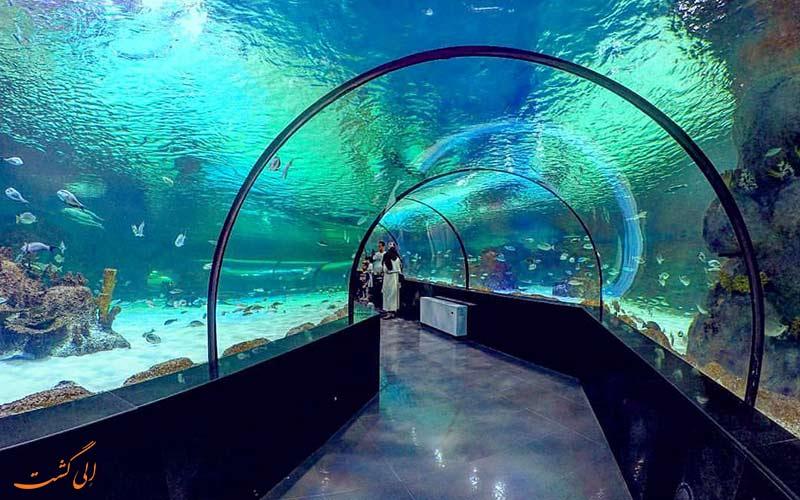 عکس تونل آبی آکواریوم انزلی