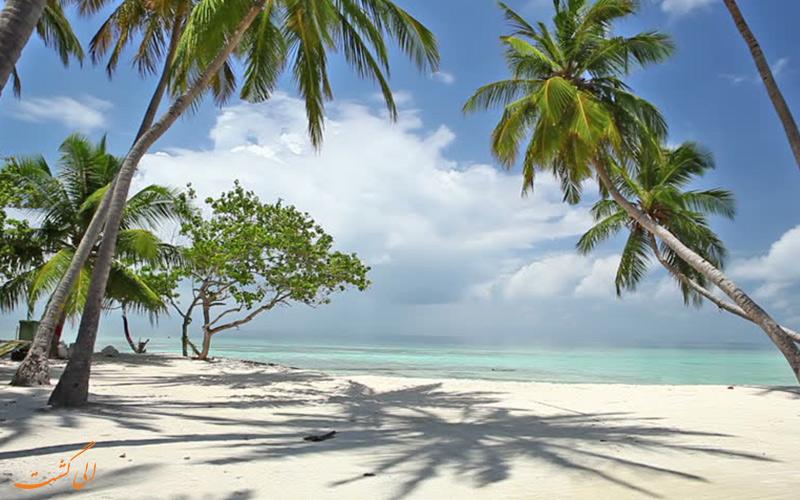 سواحل زیبای گوا با درخت های نخل گوا