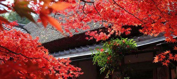 درباره سفر به ژاپن چه می دانید؟