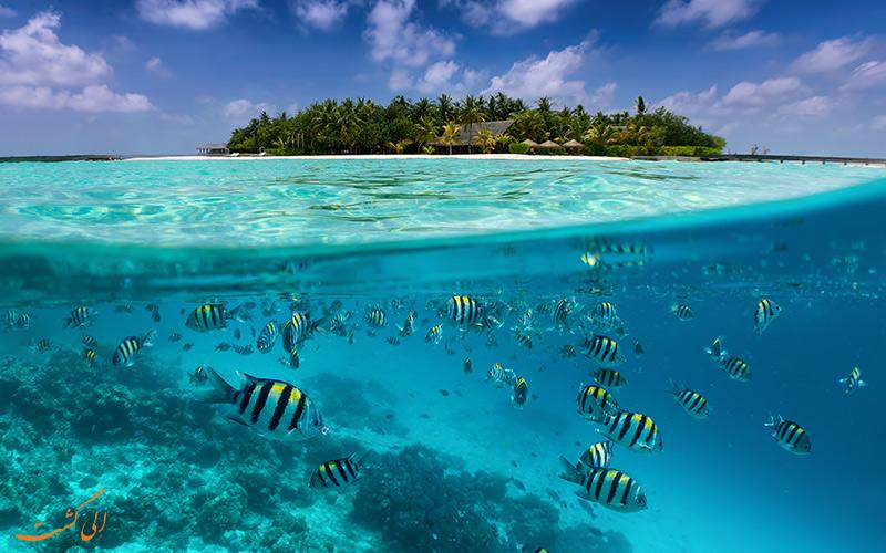 تصویری از گونه های دریایی آب های اقیانوس هند در مالدیو