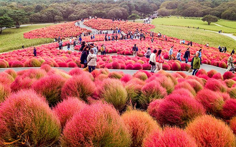 پارک هیتاچی در فصل پاییز