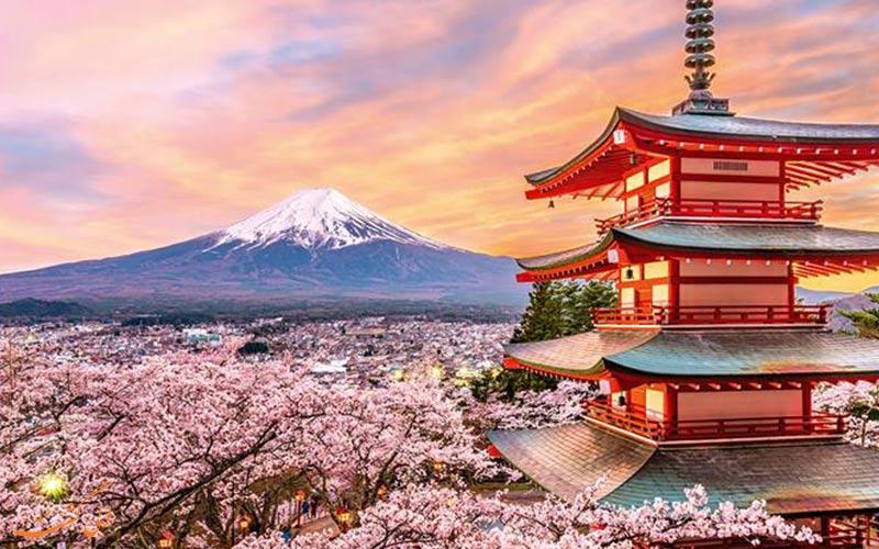 تصویری از کوه فوجی و شکوفه های گیلاس