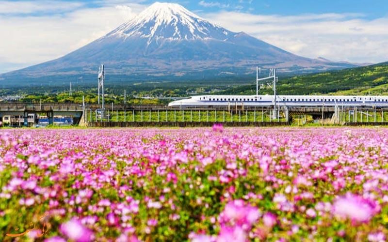 قطاری در حال گذر از دشت های پر گل