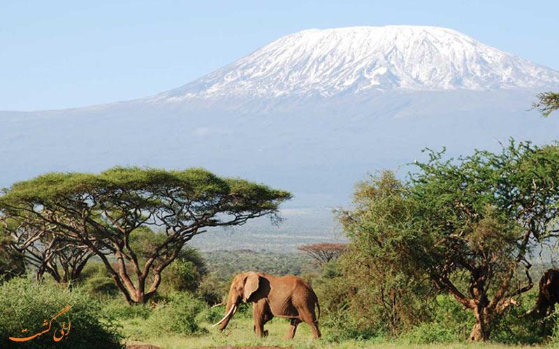 تصویری از یک فیل در دشت های کنیا