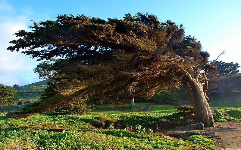 تصویر درختی عظیم الجثه در برابر باد شدید