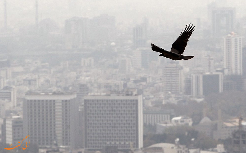 پرنده ای بر فراز آسمان آلوده در شهر تهران