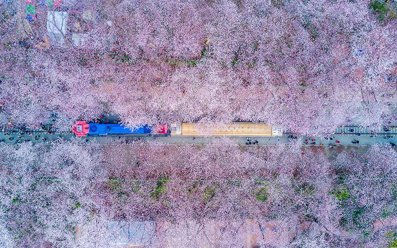قطارهای مسافربری کره جنوبی در بهار