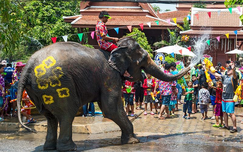 حضور فیل ها در سونگکران