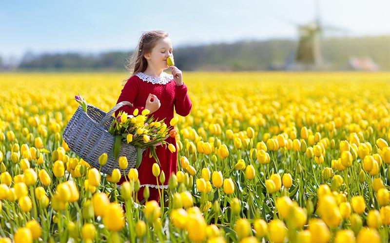 گل های لاله هلند